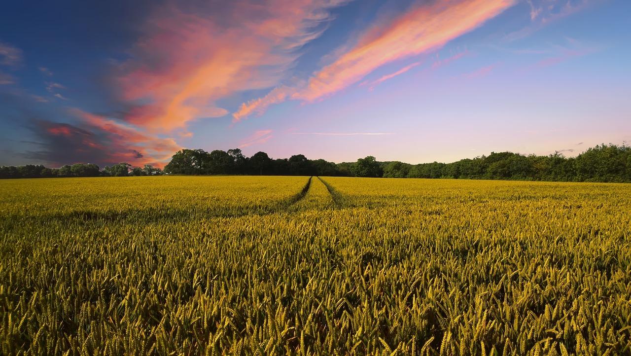 Feld | Zum Thema Glyphosat